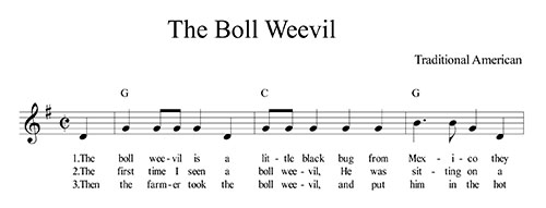 The Boll Weevil